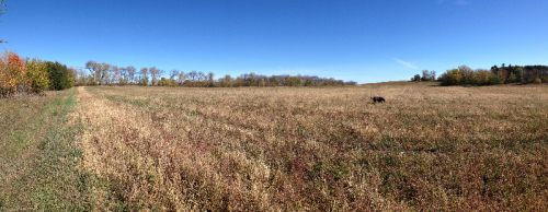 Panoramic of the new rented land.