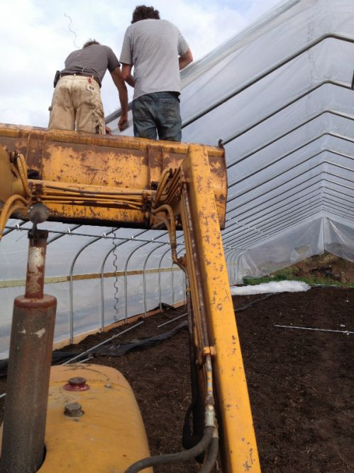 Jason and Adam tightening up plastic on new hoophouse.