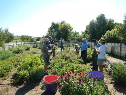 Volunteer On The Farm The Chatfield Csa At Denver Botanic Gardens Chatfield Farms
