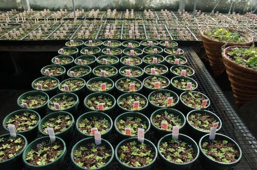 Potted Plants Growing