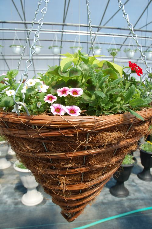 Cone Hanging Basket