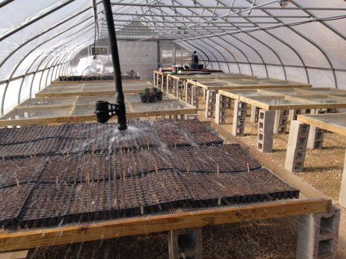 seeding trays in greenhouse