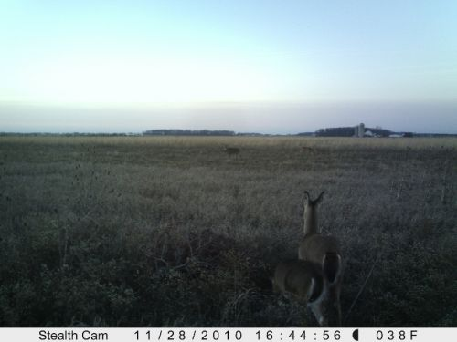 monster deer in center
