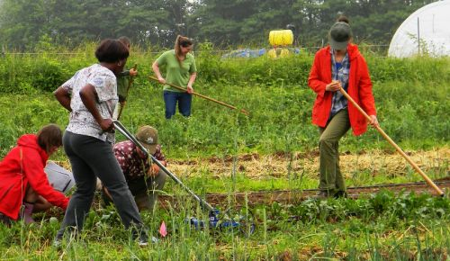 Students in Penn State Extension's Introduction to Organic Vegetable Production course get a chance to try out several types of hoes and weeders in the 'Weed Management' session.