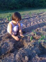 Sage Nolan plants cucumbers in the north field, summer 2010
