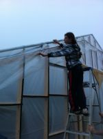 Sarah helping secure plastic of hoophouse