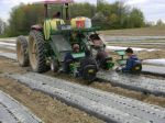 """Planting onions with the """"water wheel""""- 4,000 planted in 1 hour!"""