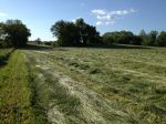 Cutting hay of field for planting our fall brassicas 6/17/13