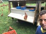 Our mobile chicken wagon gets moved around the farm so our hens always have fresh pasture