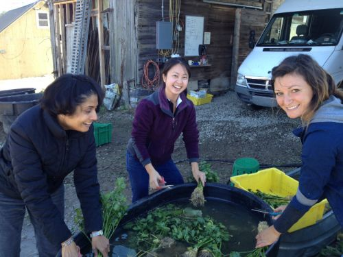 DC CSA Members helping Julie on the farm