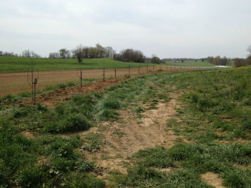 Fruit trees planted at new farm 4/26/13