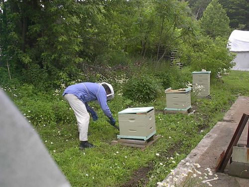 a view of a couple of hives