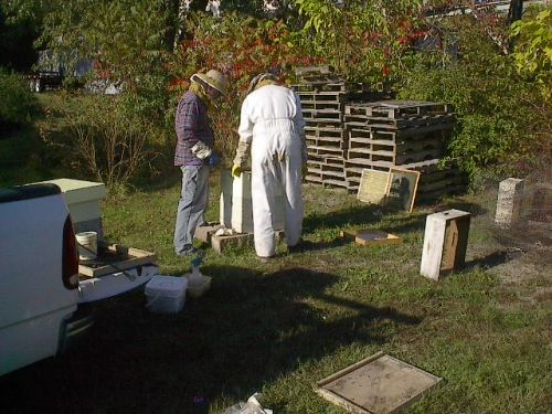 Our first hive 2008