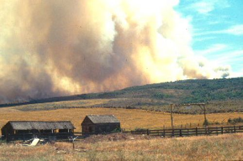 Fast burning fires fueled by annual grasses