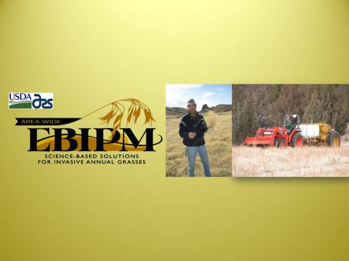 original EBIPM.org site header