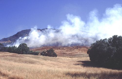 prescribed fire treatment