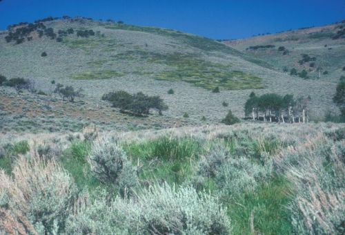 Mountain-area rangeland
