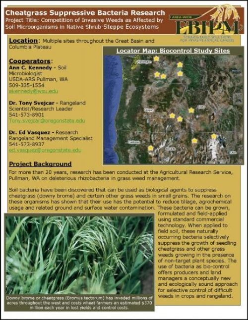 Cheatgrass Suppressive Bacteria Research website info sheet