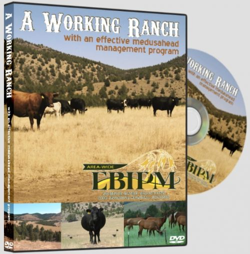 A Working Ranch with an effective medusahead management program DVD