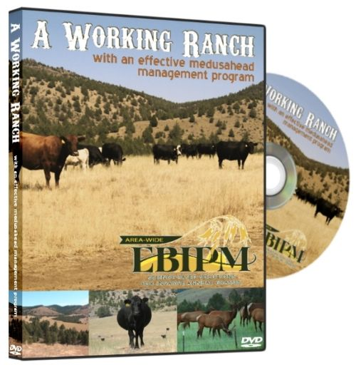 A Working Ranch with an effective medusahead management program