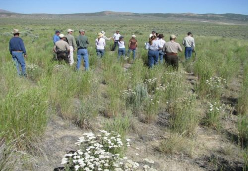 EBIPM outreach activities in the field at the North Fork Humboldt River Watershed near Elko, Nevada
