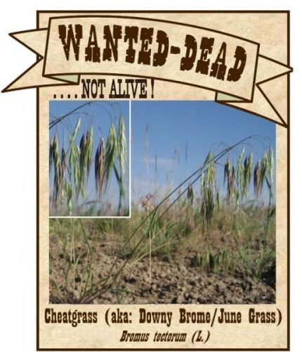 Wanted-Dead...not alive! cheatgrass poster