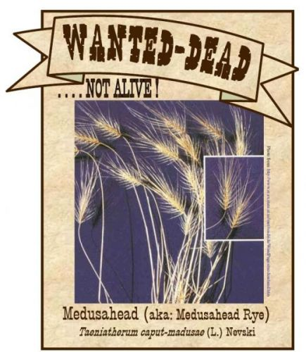 Wanted-Dead...not alive! medusahead poster