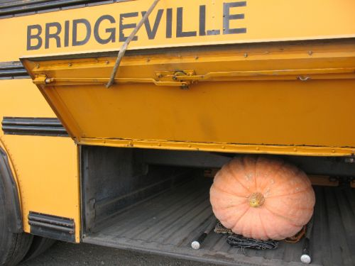 one of our giant pumpkins goes home with the Bridgeville School