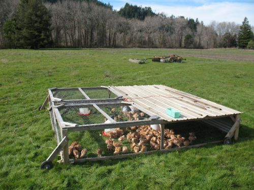 Pastured poultry in February