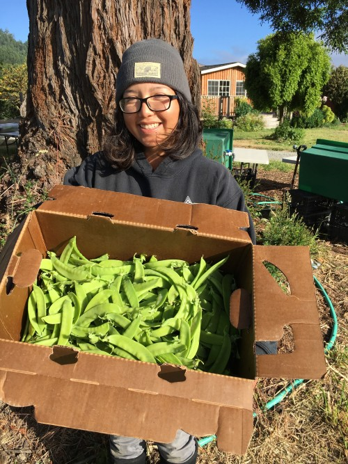 Our beloved Jackie with our beloved snow peas.