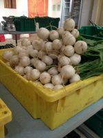 Hakurei turnips ready for pickup!