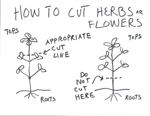 How to Cut Herbs and Flowers