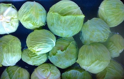 Washing cabbages