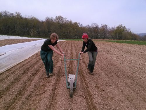 Seeding spinach