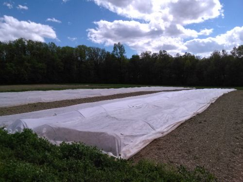 row covers on spring crops