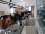 new milking parlor