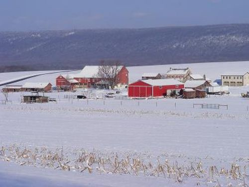 Winter Time on the farm