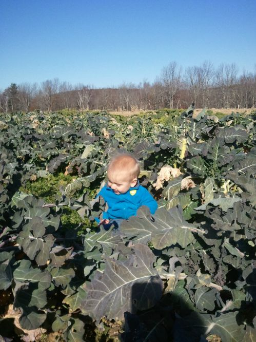 baby in brassicas