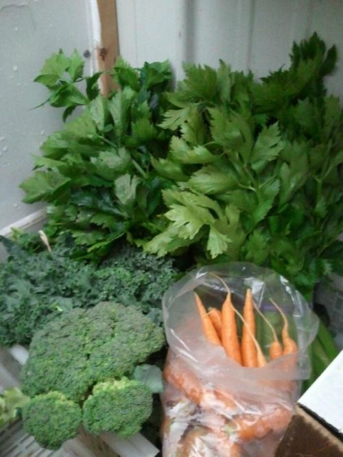 whole sale produce (carrot, broccoli)