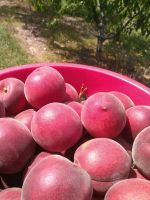 Fresh White Peaches