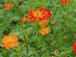 Cosmos on fire