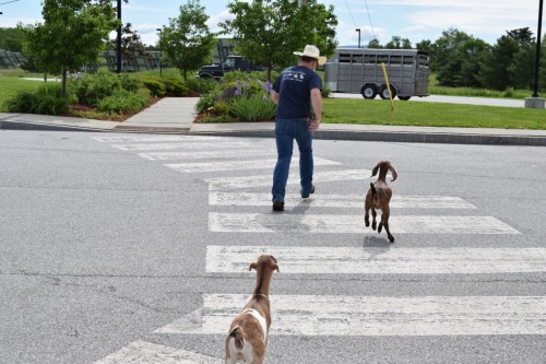 abbey road? goat road?