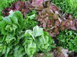 Piles of Spring Greens