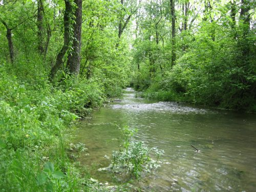 Linville Creek Where It Flows By The Field