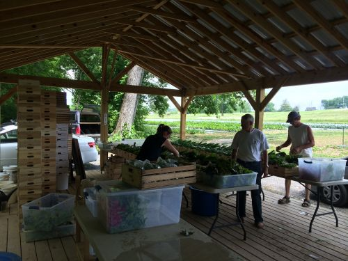Packing the CSA crates