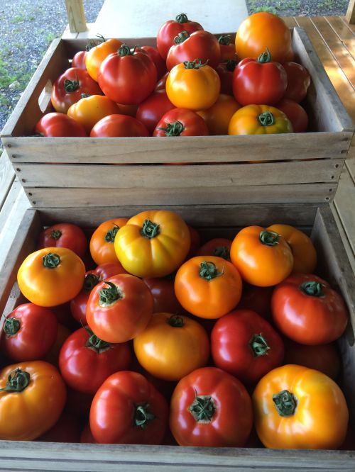 First tomatoes of the season 2014
