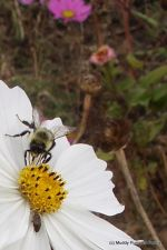 Our friendly pollinators, a great reason to plant flowers in the garden