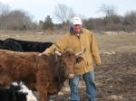 Bill and Lady, Irish Dexter cow