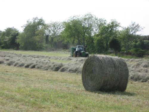 Bill making hay