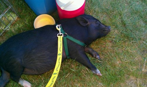 Me napping at the outdoor market